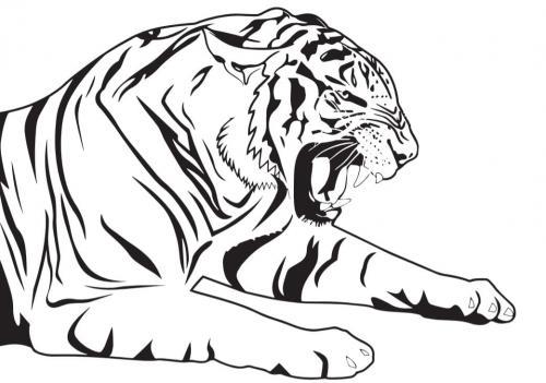 immagini di una tigre