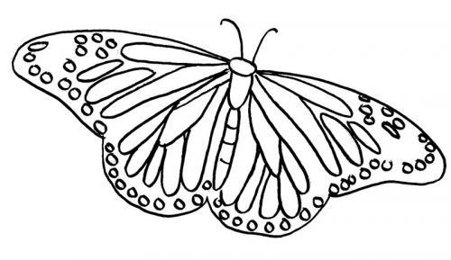 immagini farfalle