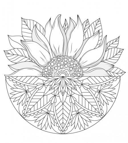immagini fiori girasoli