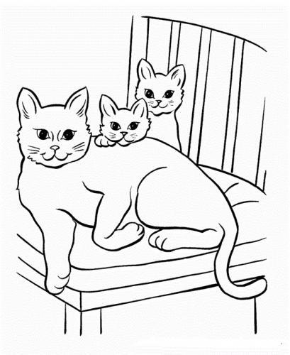 immagini gatti carini