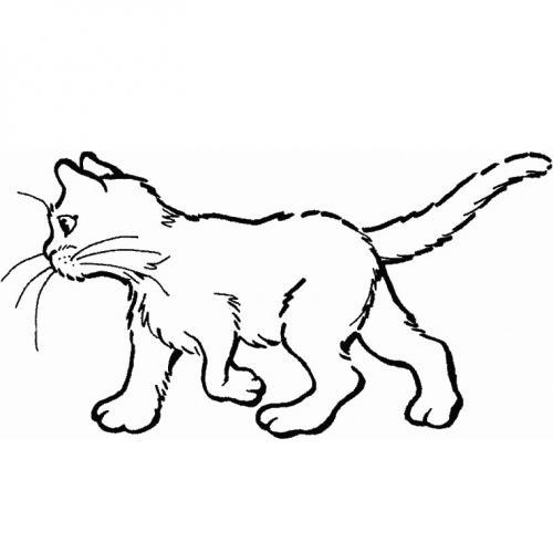 immagini gatti da disegnare