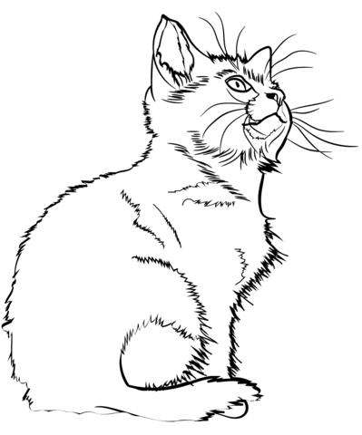 immagini gattini carini