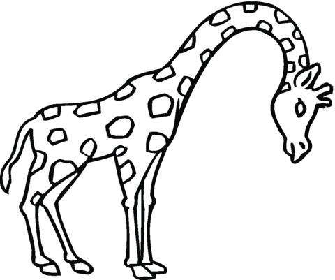 immagini giraffe cartoni