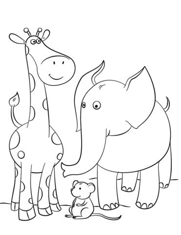 immagini giraffe