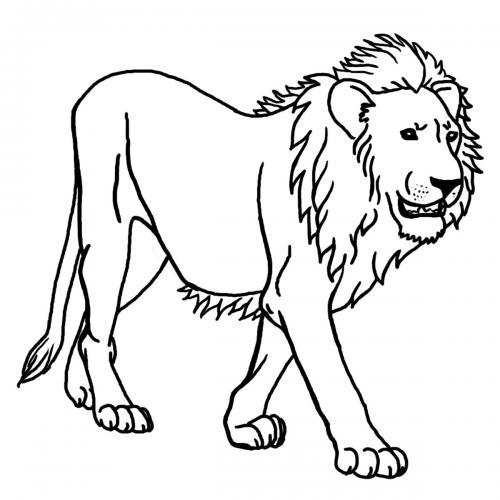 immagini leone