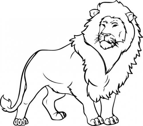 immagini leoni