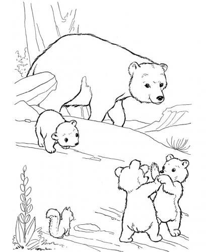 immagini orsetti da colorare