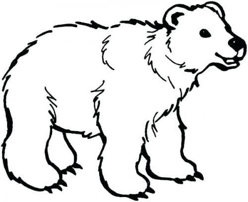 immagini orsi da colorare