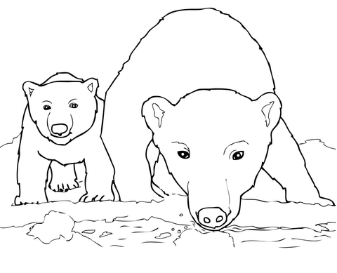 immagini orsi
