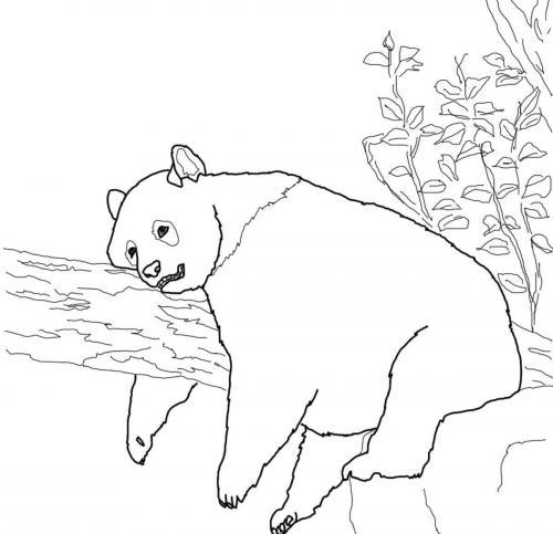 immagini panda animale