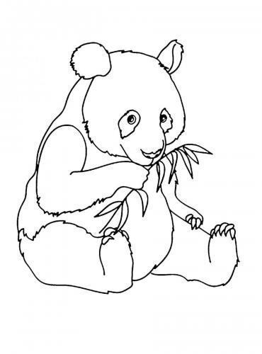 panda che mangia