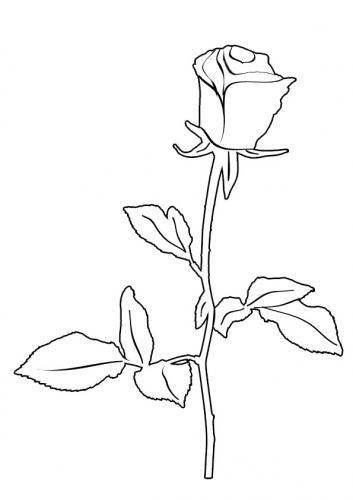 immagine di una rosa