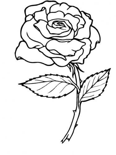 rosa stilizzata