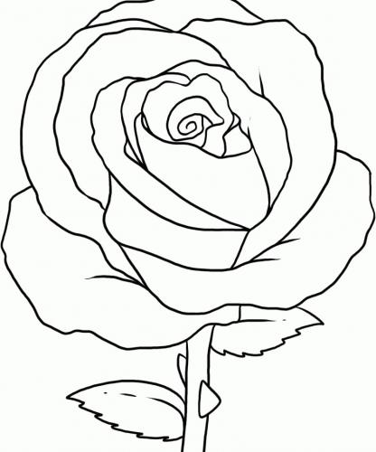 rosa semplice