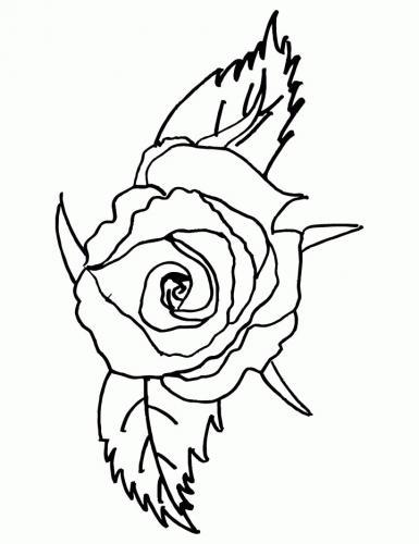 rosa a forma di uccello
