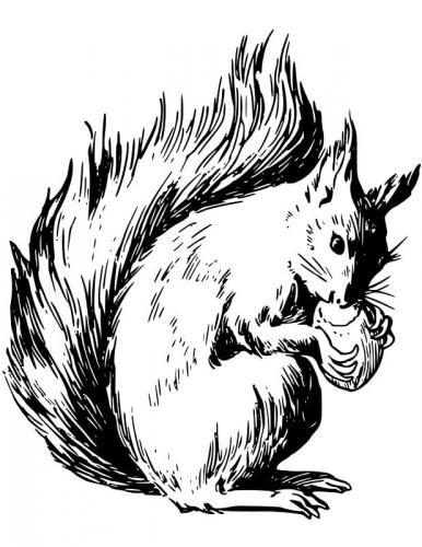 immagini scoiattoli da colorare