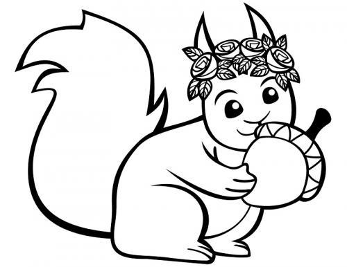 immagini scoiattoli