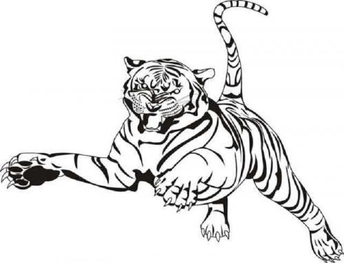 immagini tigre bianca arrabbiata