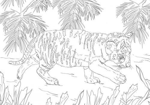 immagini tigre bianca