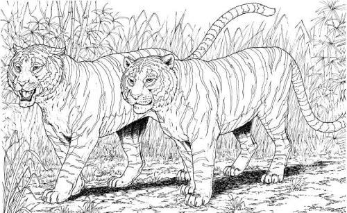 immagini tigre da colorare