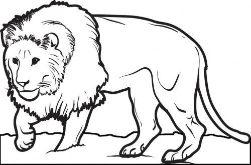 leone da disegnare