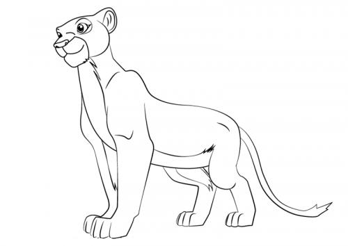 leonessa immagine