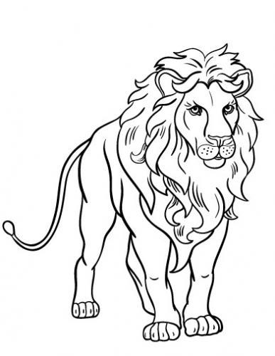 leoni disegno