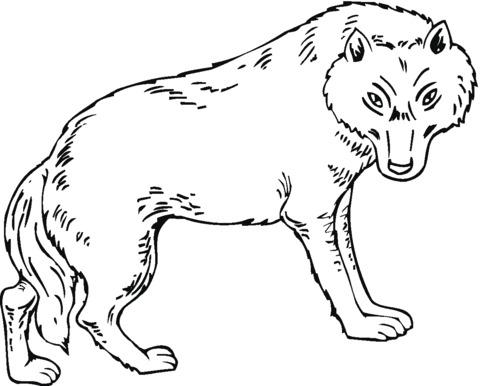 lupo da colorare e stampare