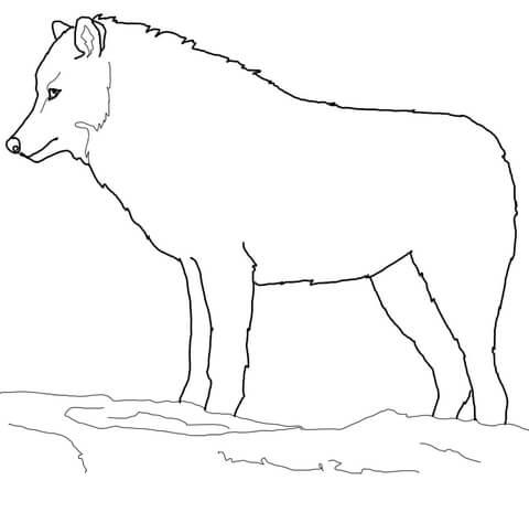 lupo disegno bambini
