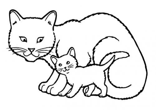 mamma gatto e cucciolo