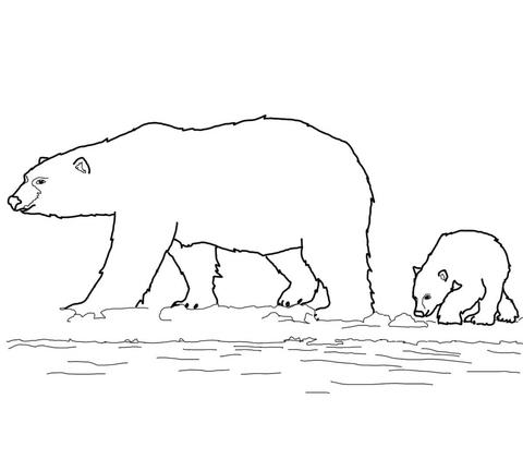 orsacchiotti disegni