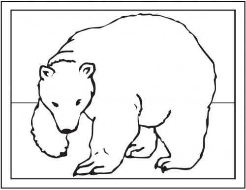 orsetti disegnati
