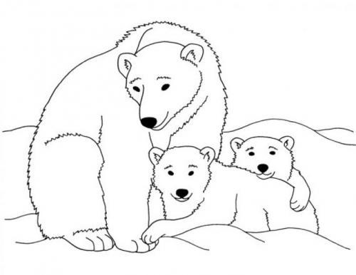 orsi da colorare