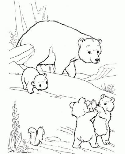 orsi da disegnare