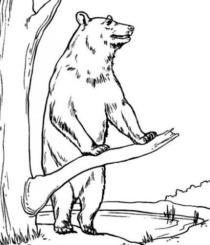 orso appoggiato ad un ramo