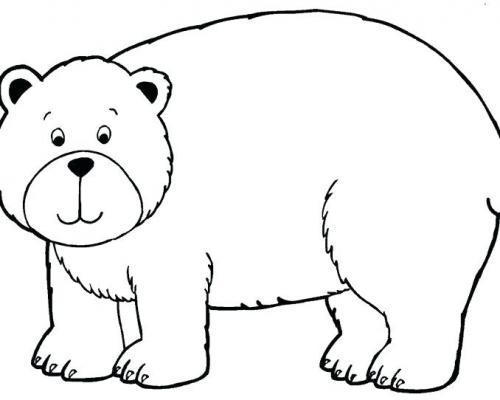 orso da disegnare