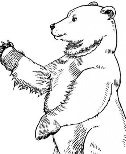 orso di profilo
