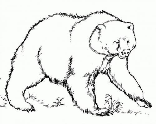 orso feroce