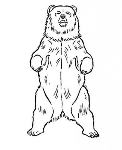 orso figura intera