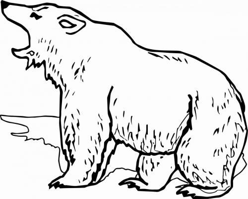 orso grizzly da colorare