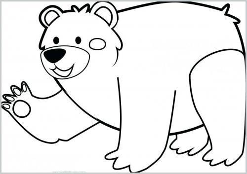 orso immagini