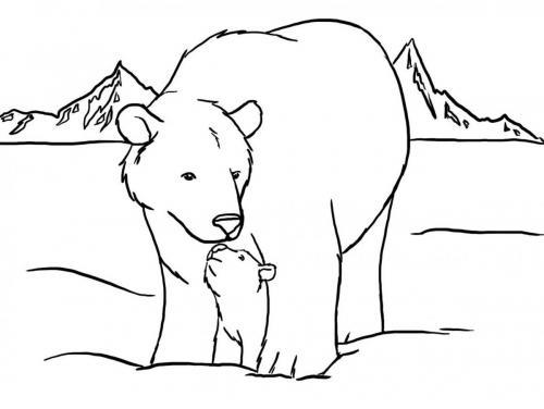 orso polare da colorare per bambini