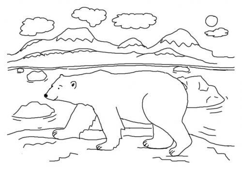 orso polare da colorare