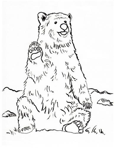 orso seduto