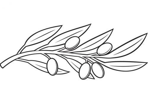 disegno ulivo