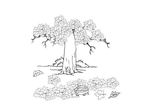 Albero sfoglio
