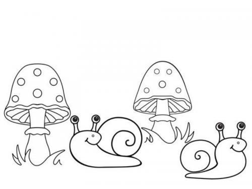 Funghi e lumache