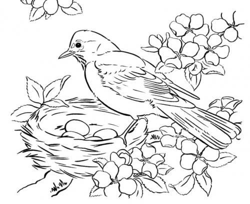 uccelli che fanno il nido