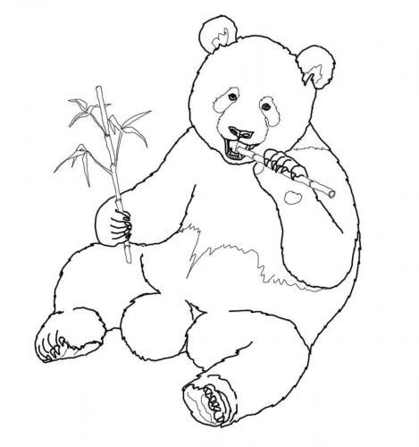 panda animale disegno da colorare