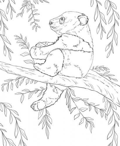 panda animale disegno
